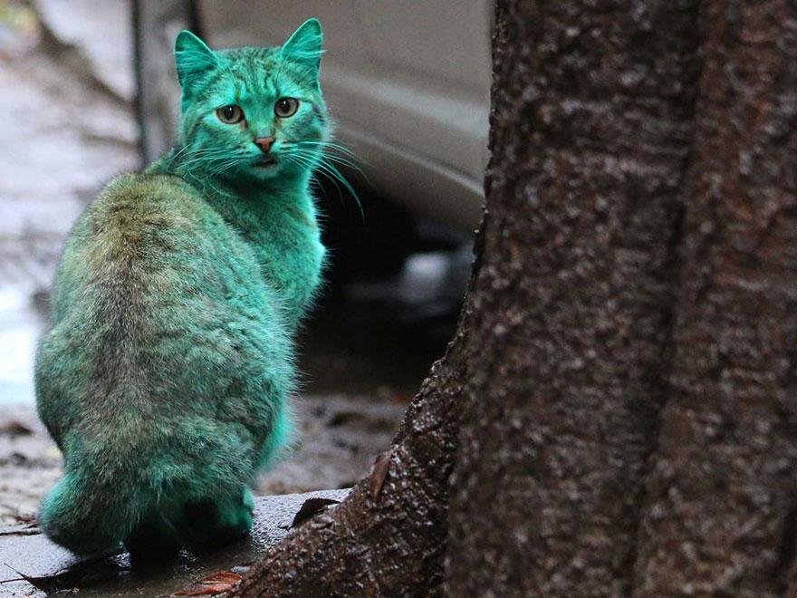 greencat2