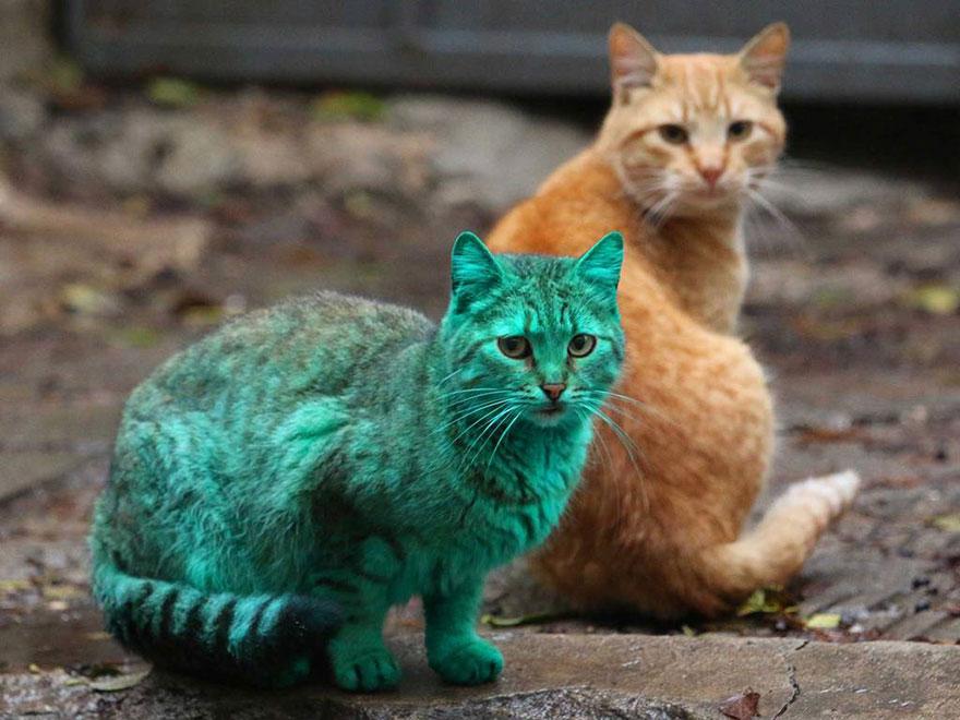 greencat3