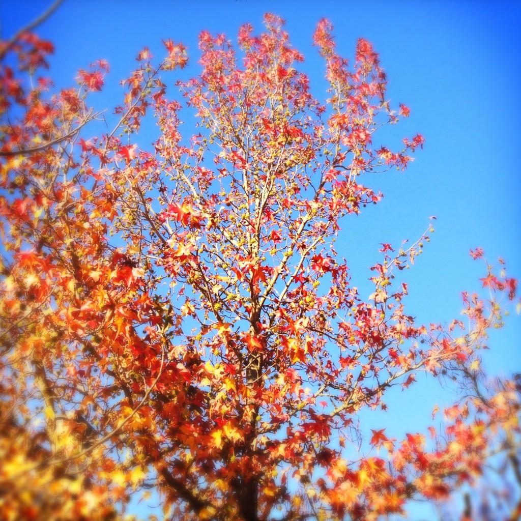 012-Leaves (06.12.2014)