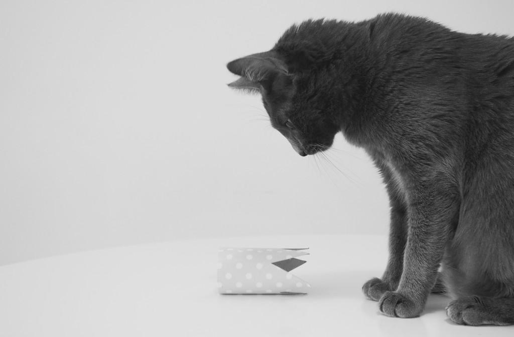 Nori Cat