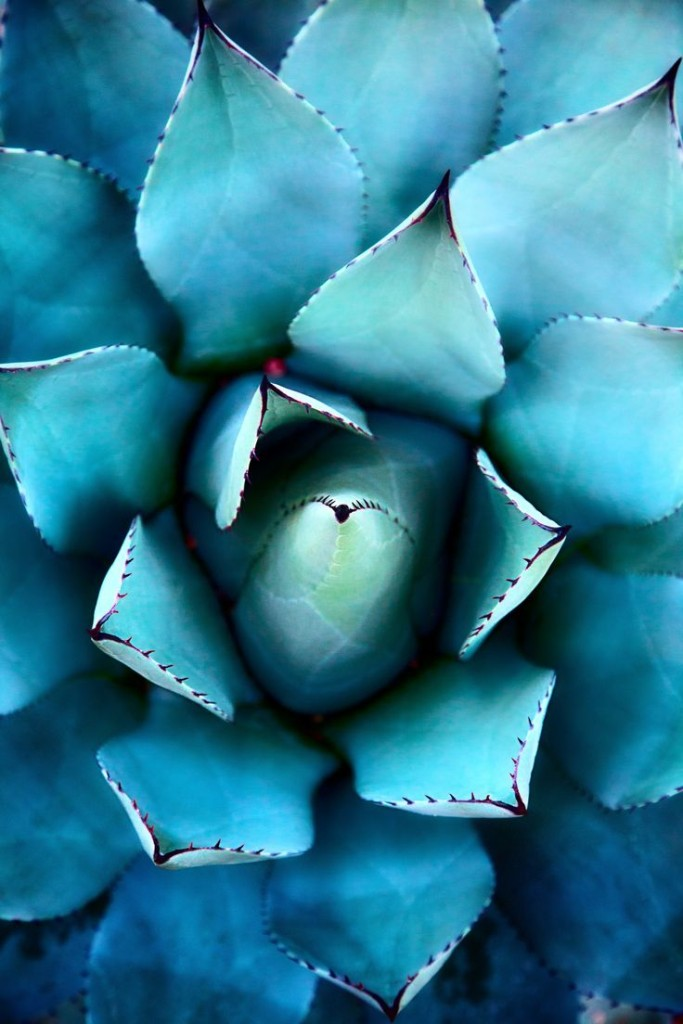 Pantone Scuba Blue 03