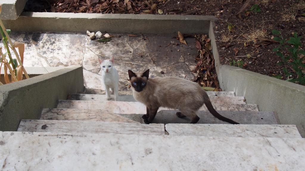 01 gatos