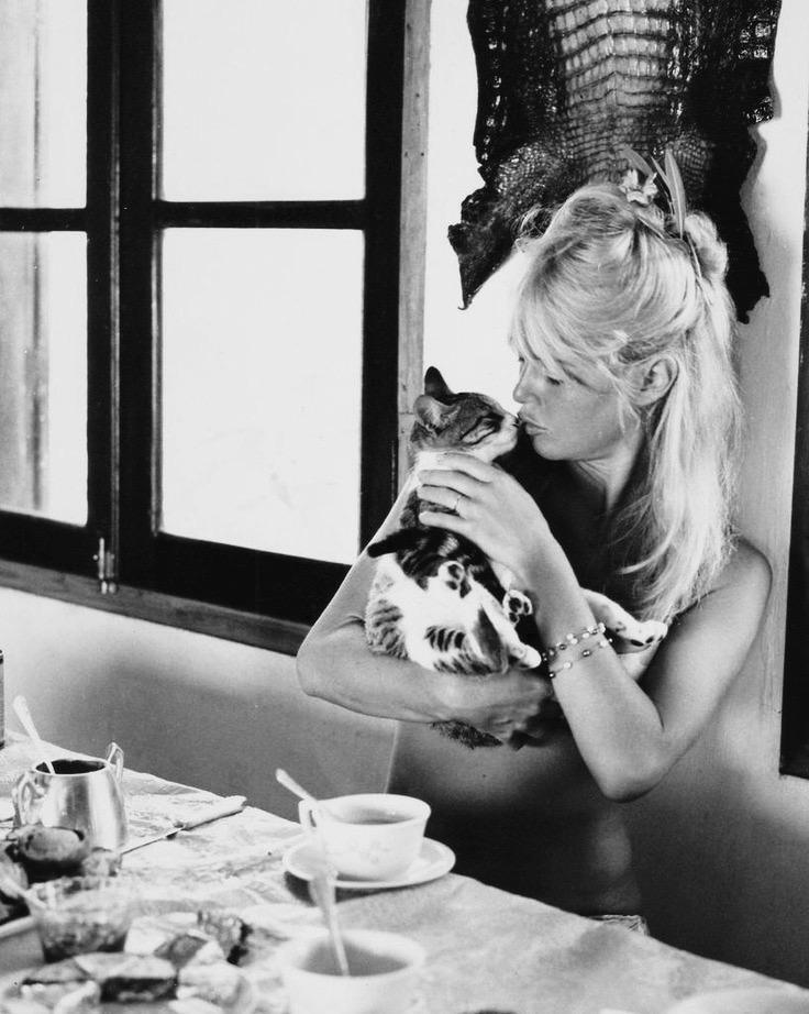 brigitte_bardot_cat