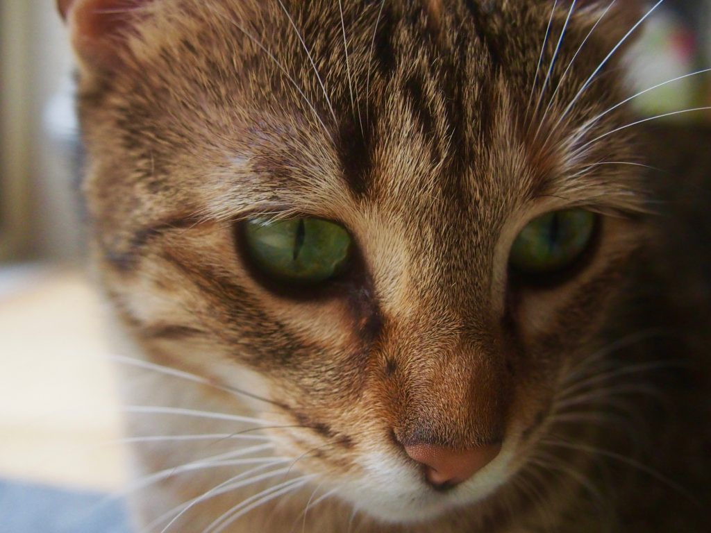Kimi Cat